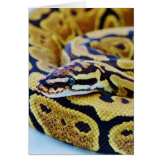 黄色および黒い球の大蛇の休息 カード