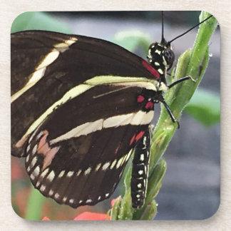 黄色および黒い蝶翼 コースター