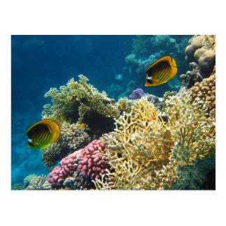 黄色および黒い蝶魚 ポストカード