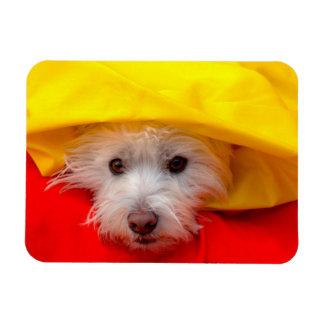 黄色からかいま見るウエスト・ハイランド・ホワイト・テリア マグネット