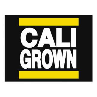 黄色く育つCali ポストカード