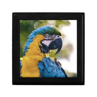 黄色く青いコンゴウインコのオウム ギフトボックス