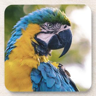 黄色く青いコンゴウインコのオウム コースター