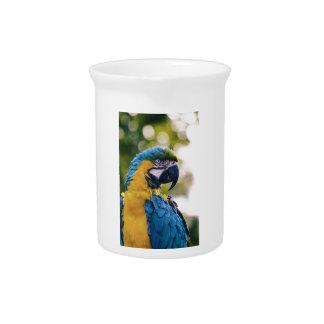 黄色く青いコンゴウインコのオウム ピッチャー