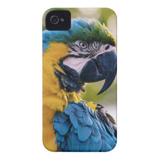 黄色く青いコンゴウインコのオウム Case-Mate iPhone 4 ケース