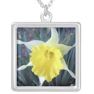 黄色によってはラッパスイセンのラッパスイセンの花の写真が開花します シルバープレートネックレス
