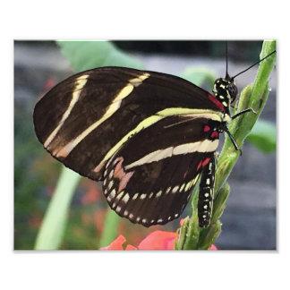 黄色のストライブ柄を持つ美しく黒い蝶 フォトプリント