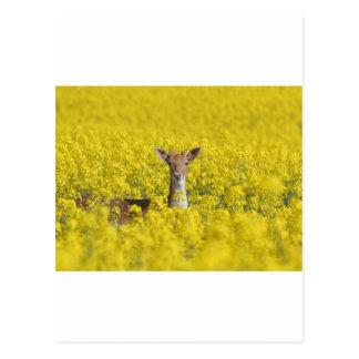 黄色の休閑地 ポストカード