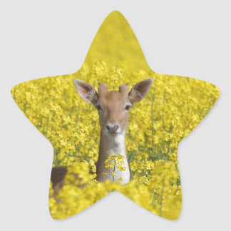 黄色の休閑地 星シール