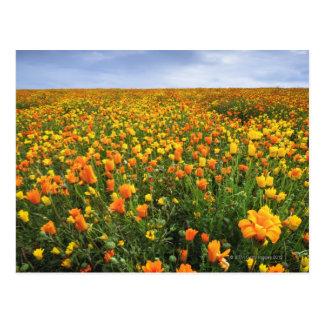 黄色の分野、マリオン郡、オレゴン ポストカード
