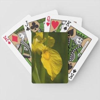 黄色アイリス花の美しい写真 バイスクルトランプ