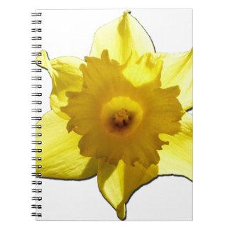 黄色トランペットのラッパスイセン1.0 ノートブック