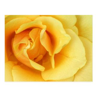 黄色バラの花の郵便はがき ポストカード