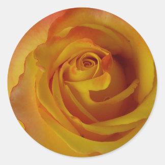 黄色バラの芽 ラウンドシール