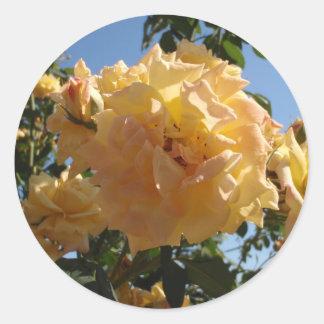 黄色バラの茂み ラウンドシール