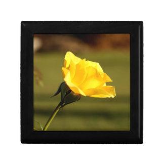 黄色バラを通してろ過する日光 ギフトボックス