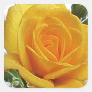 黄色バラ1a スクエアシール