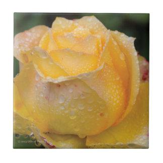 黄色バラ-セラミックタイルの結露 タイル