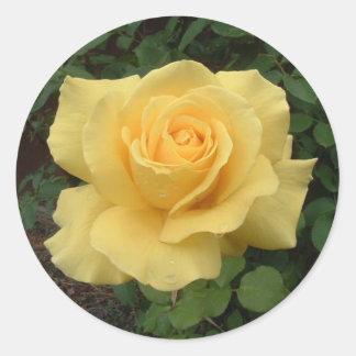 黄色バラ ラウンドシール