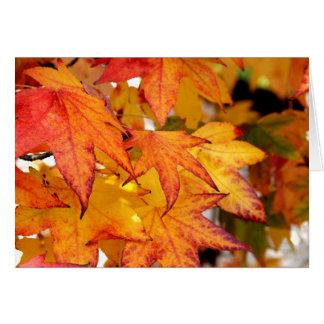 黄色及びオレンジかえでの葉 カード