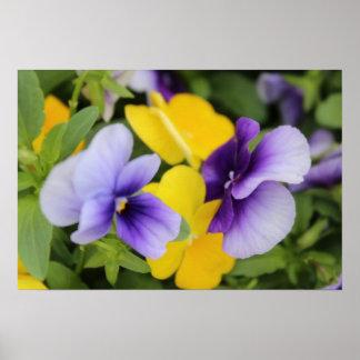 黄色及び紫色 ポスター