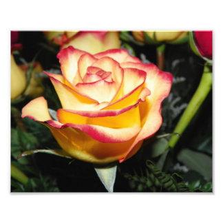 黄色及び赤いバラ フォトプリント