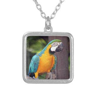 黄色及び青のコンゴウインコの鳥 シルバープレートネックレス