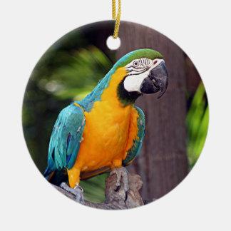 黄色及び青のコンゴウインコの鳥 セラミックオーナメント