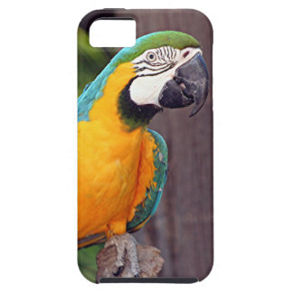 黄色及び青のコンゴウインコの鳥 iPhone SE/5/5s ケース