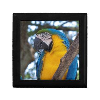 黄色緑および青い熱帯コンゴウインコ ギフトボックス