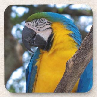黄色緑および青い熱帯コンゴウインコ コースター