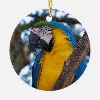 黄色緑および青い熱帯コンゴウインコ セラミックオーナメント