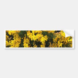黄色鐘の花 -- 原産のオーストラリア人 バンパーステッカー
