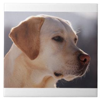黄色3 Labrador_Retriever.png タイル
