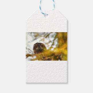 黄褐色のFROGMOUTHのフクロウクイーンズランドオーストラリア ギフトタグ