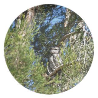 黄褐色のFROGMOUTH田園クイーンズランドオーストラリア プレート