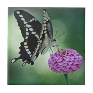 黒いアゲハチョウの蝶タイル タイル