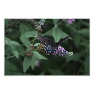 黒いアゲハチョウの蝶プリント フォトプリント