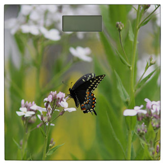黒いアゲハチョウの蝶 体重計