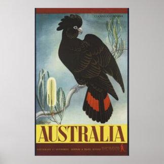 黒いオウムのヴィンテージポスター ポスター