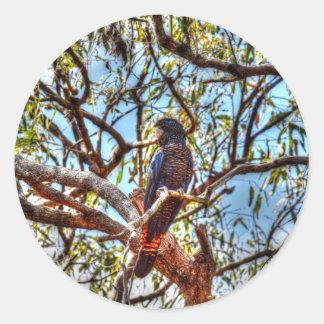 黒いオウム田園クイーンズランドオーストラリア ラウンドシール