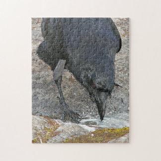 黒いカラスの写真 ジグソーパズル