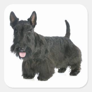 黒いスコットランドテリアの小犬のステッカー/シール スクエアシール