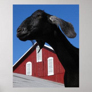 黒いヤギおよび赤い納屋 ポスター