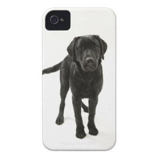 黒いラブラドル・レトリーバー犬 Case-Mate iPhone 4 ケース