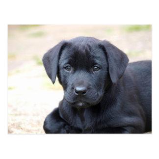 黒いラブラドールの子犬の郵便はがき ポストカード