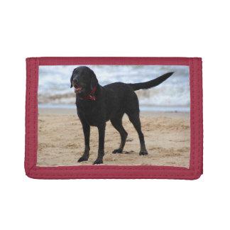 黒いラブラドール犬