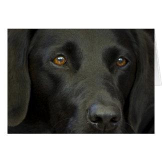黒いラブラドール犬 カード
