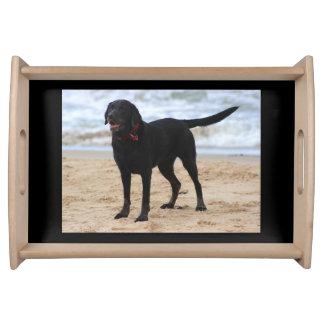 黒いラブラドール犬 トレー