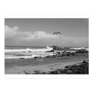 黒い及び白の太平洋果樹園の嵐 ポストカード